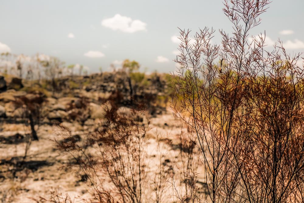 Wandern bei extremer Hitze im Nitmiluk National Park in Australien: Unser Erfahrungsbericht