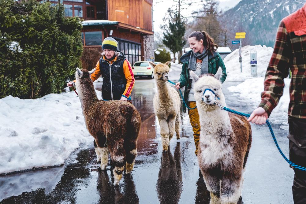 Alpaka-Inzell-Wandern-Alpakawanderung-Tipps-19