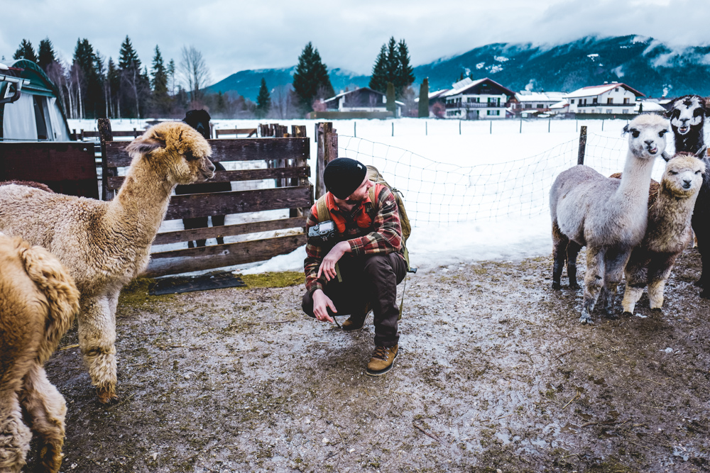Alpaka-Inzell-Wandern-Alpakawanderung-Tipps-42