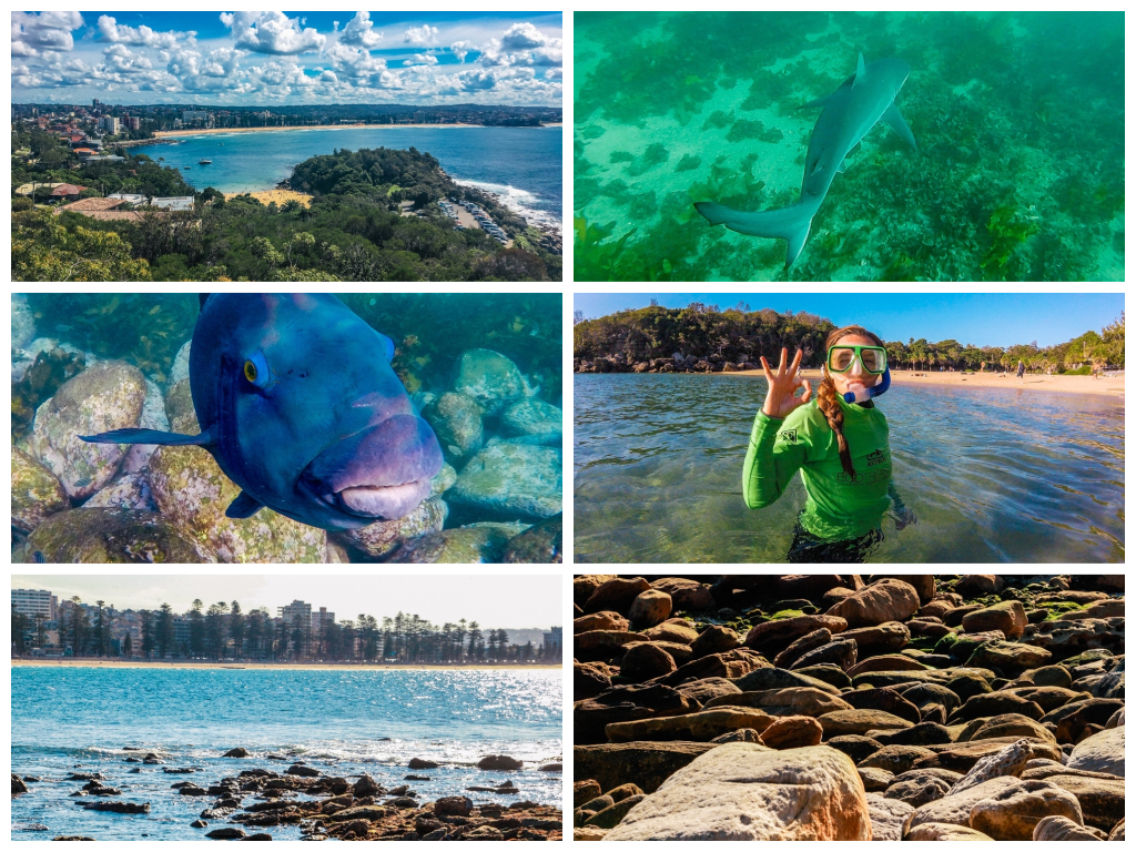 Eco Treasure – Die Manly Snorkelling and Northern Beaches Tour