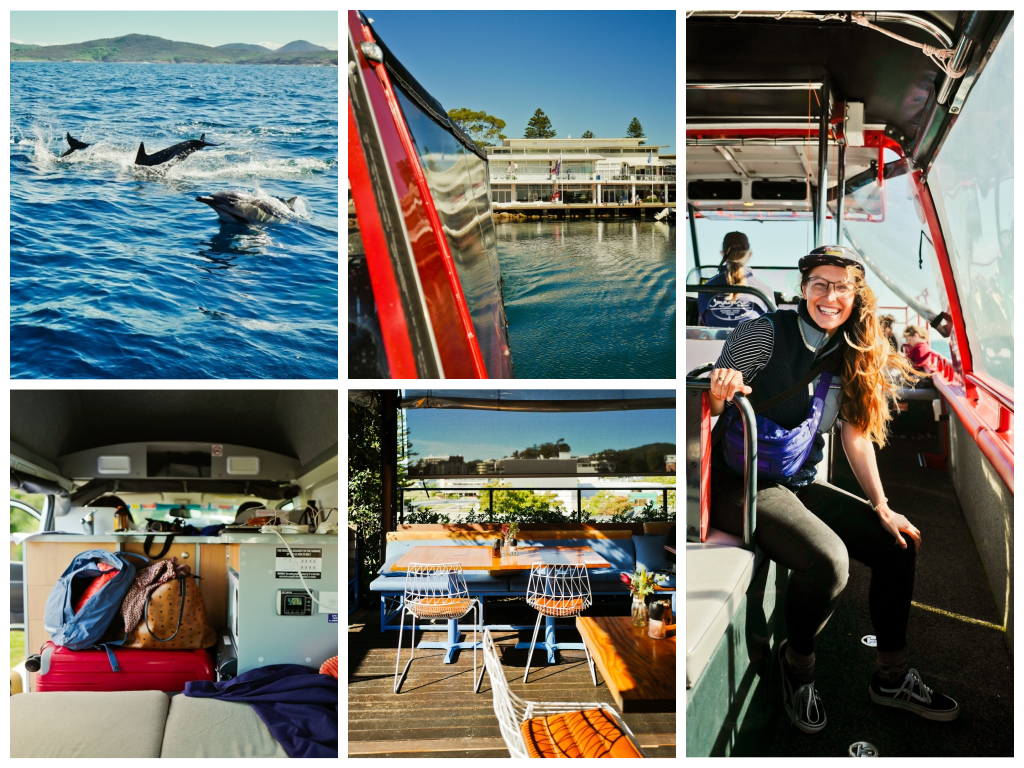 Whale Watching Tour Australien