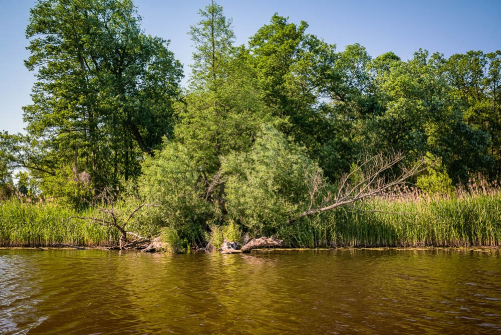 Paddeln Kanutour Oder Nationalpark Unteres Odertal Brandenburg Polen Berlin