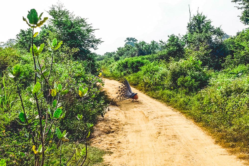 Sri Lanka Backpacking Tipps