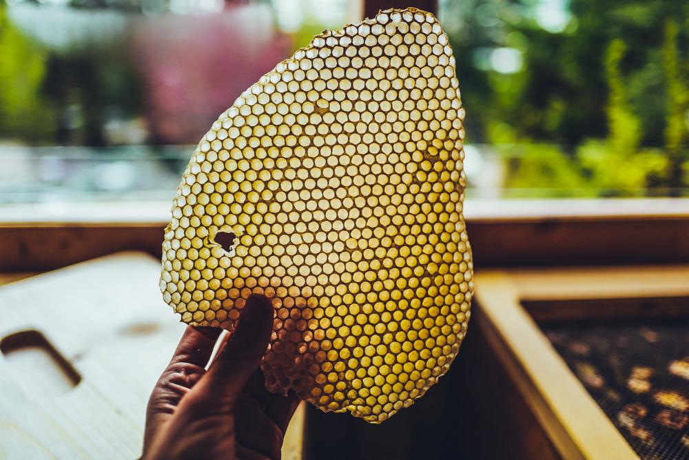 Zwischen Bienen & Kräutern