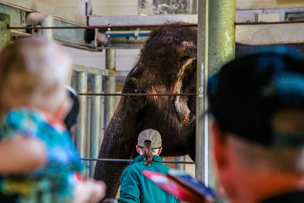 Sydney Tour Empfehlungen Australien City Trip Taronga Zoo