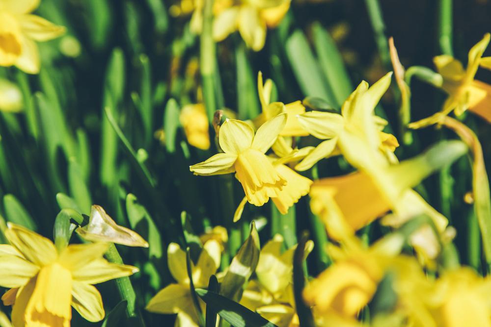 Schweden Urlaub im Frühling