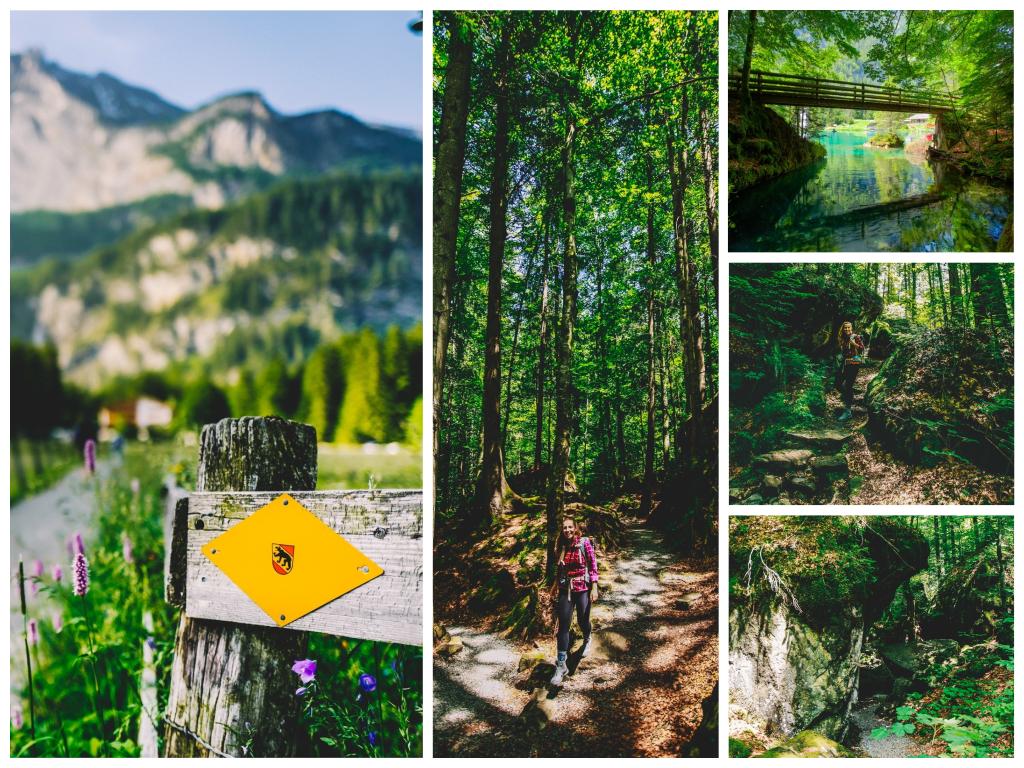 Alpaka Wandern Blausee Schweiz