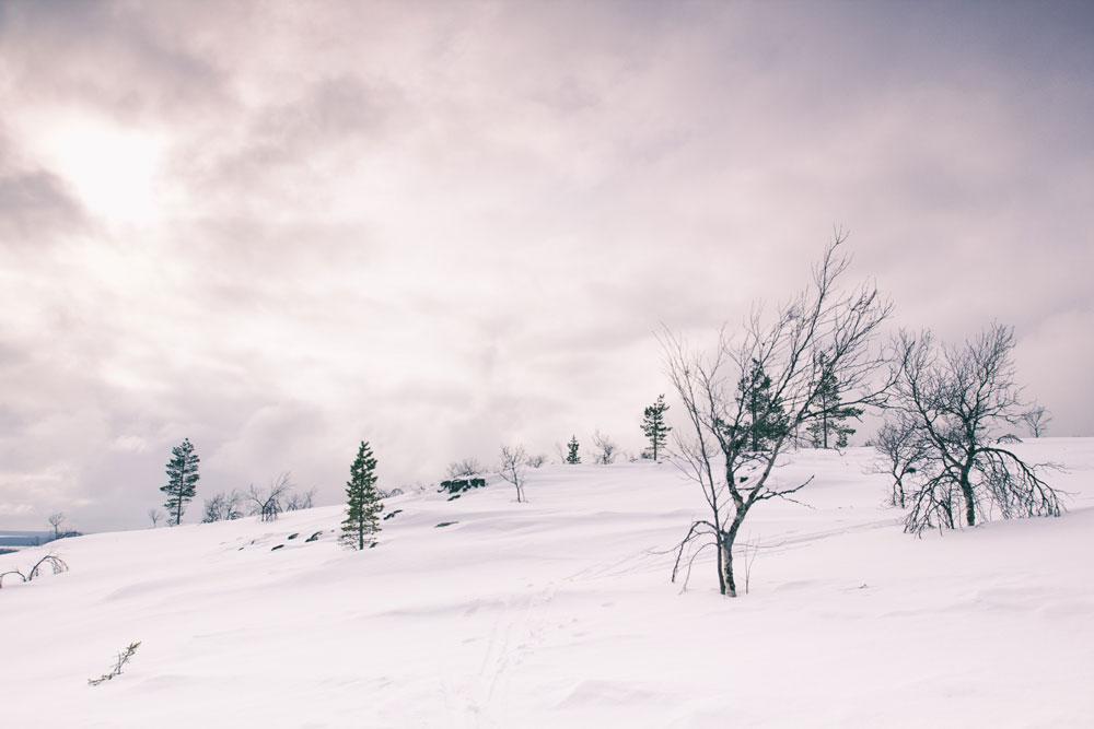 bear-ski-30