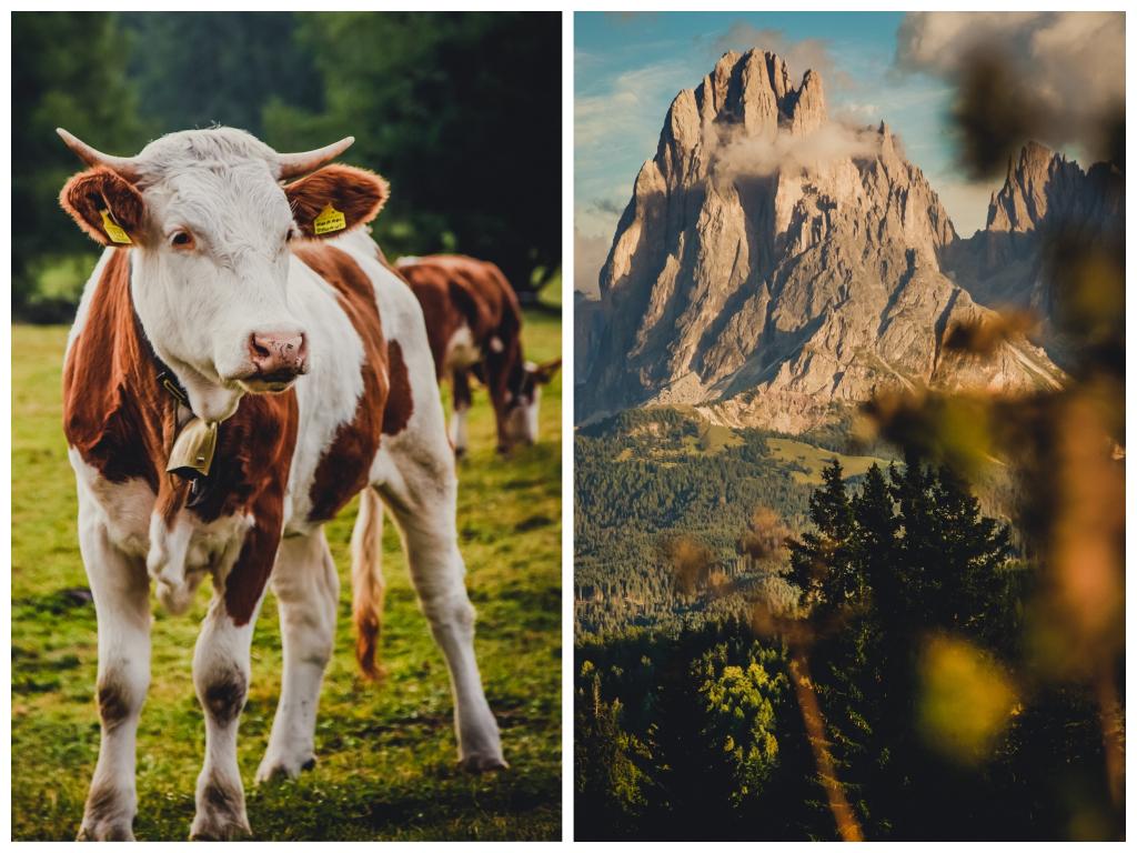 Das Mea Via Slow Farm Hotel in Südtirol