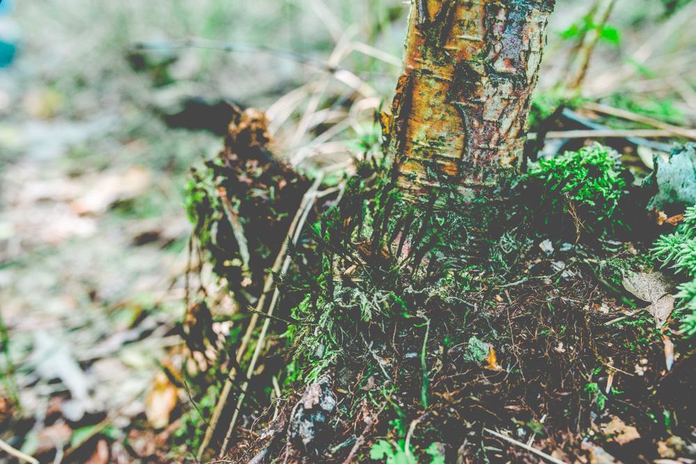 volvic-ruegen-biosphaerenreservat-naturschutz-113