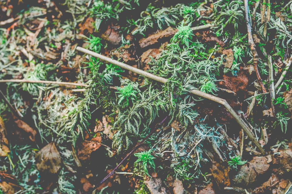 volvic-ruegen-biosphaerenreservat-naturschutz-101