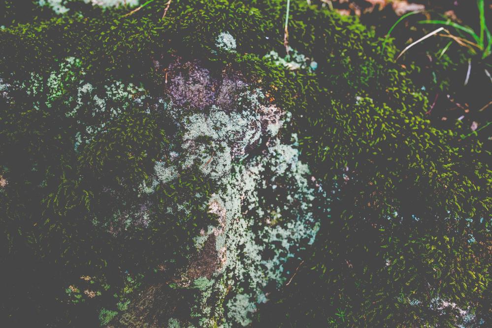 Dieses Häuschen steht an der Grenze zum Wald um das Moor, den wir bewandert haben.