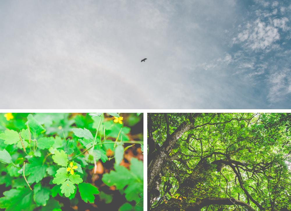 volvic-ruegen-biosphaerenreservat-naturschutz-117