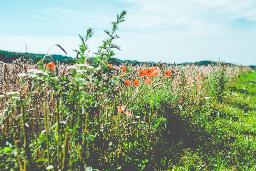 volvic-ruegen-biosphaerenreservat-naturschutz-112