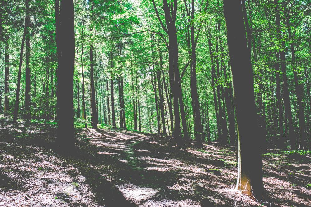volvic-ruegen-biosphaerenreservat-naturschutz-83