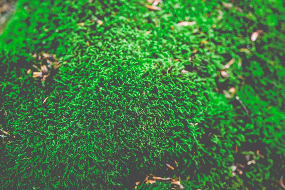volvic-ruegen-biosphaerenreservat-naturschutz-110