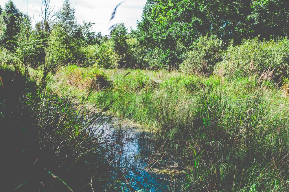 volvic-ruegen-biosphaerenreservat-naturschutz-118