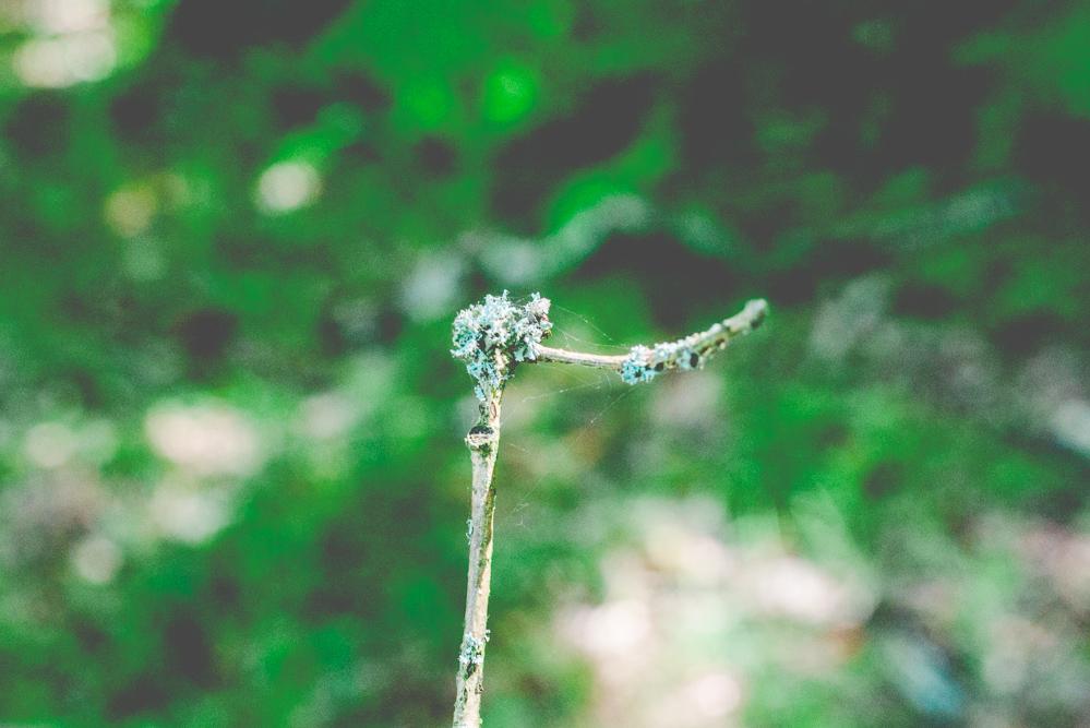 volvic-ruegen-biosphaerenreservat-naturschutz-78